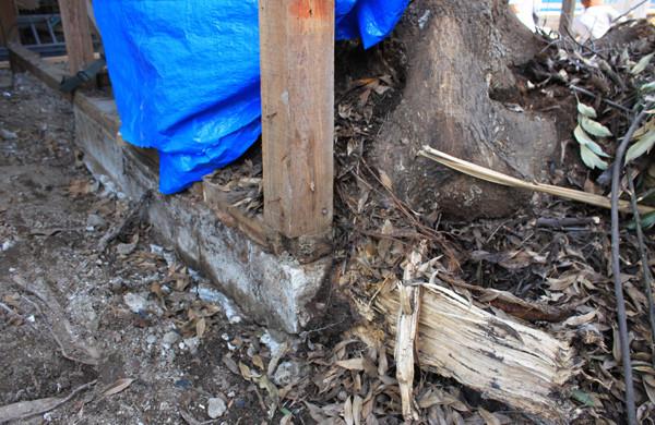 根っこでコンクリートの基礎も割れています