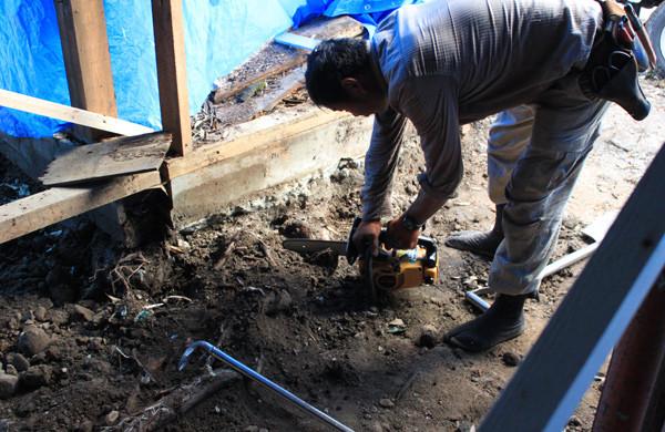 基礎の下に入り込んでいた根も切ります